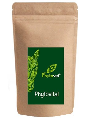 Phytovital für Pferde